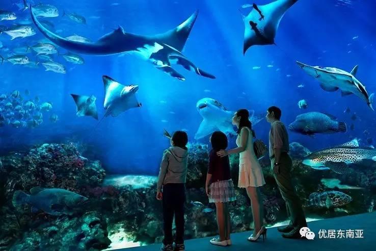 壁纸 海底 海底世界 海洋馆 水族馆 桌面 738_492